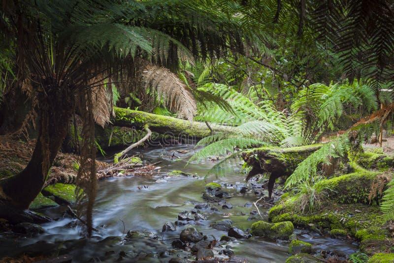 Russell Falls, zet Gebieds Nationaal park, Tasmanige, Australië op royalty-vrije stock foto's