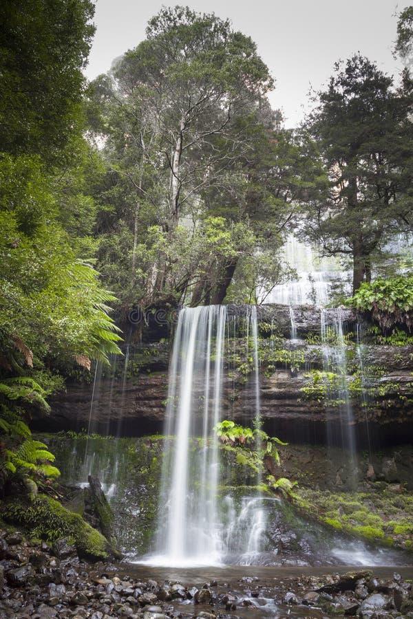 Russell Falls, zet Gebieds Nationaal park, Tasmanige, Australië op stock afbeelding