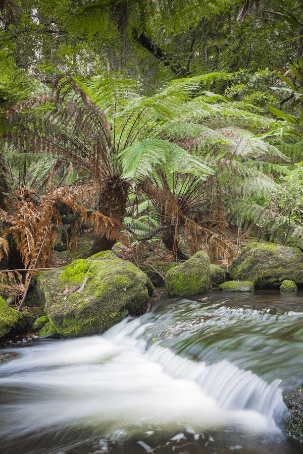 Russell Falls, zet Gebieds Nationaal park, Tasmanige, Australië op stock afbeeldingen
