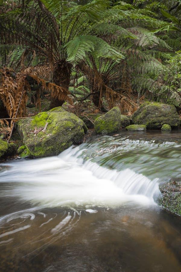 Russell Falls, zet Gebieds Nationaal park, Tasmanige, Australië op royalty-vrije stock foto