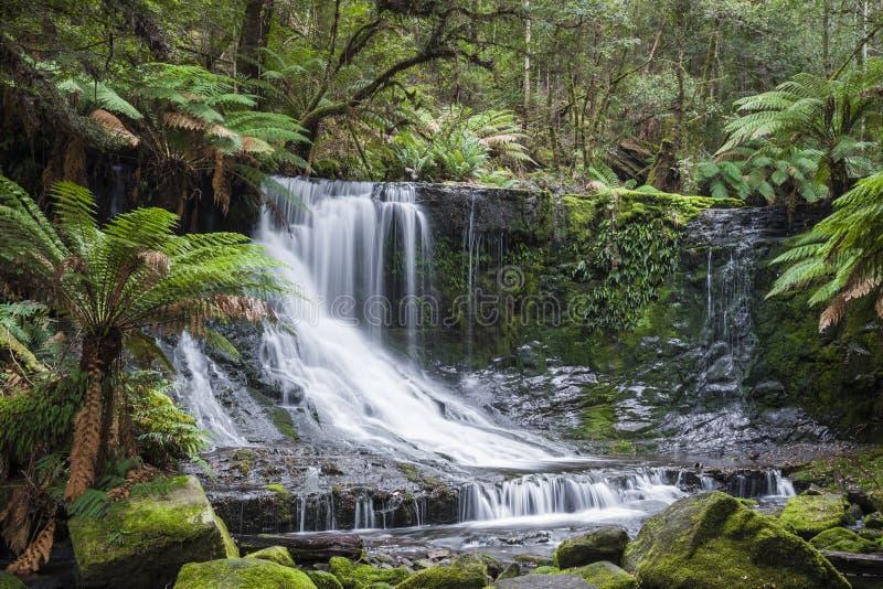 Russell Falls, zet Gebieds Nationaal park, Tasmanige, Australië op stock foto's