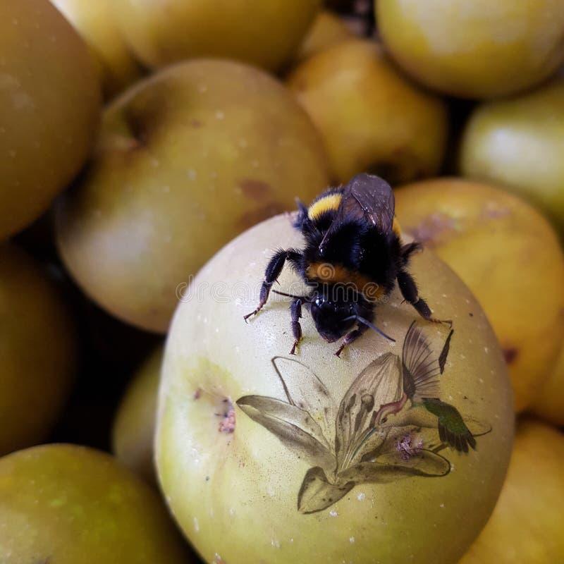 Russet μήλα Egremont στοκ φωτογραφία με δικαίωμα ελεύθερης χρήσης