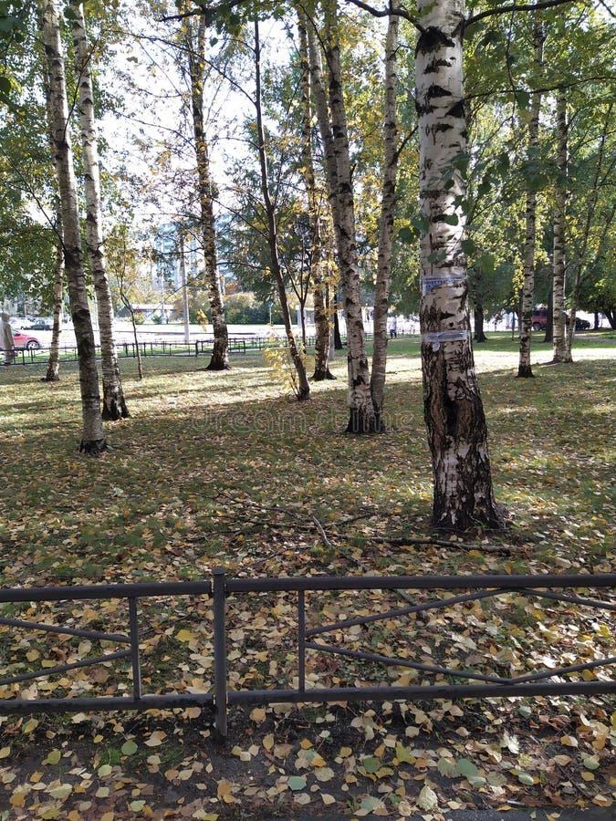 Russia autumn trees stock photos