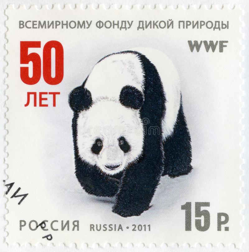 RUSSIA - 2011: shows panda, The 50th anniversary of the World Wildlife Fund for Nature, WWF. RUSSIA - CIRCA 2011: A stamp printed in Russia shows panda, The 50th royalty free stock image