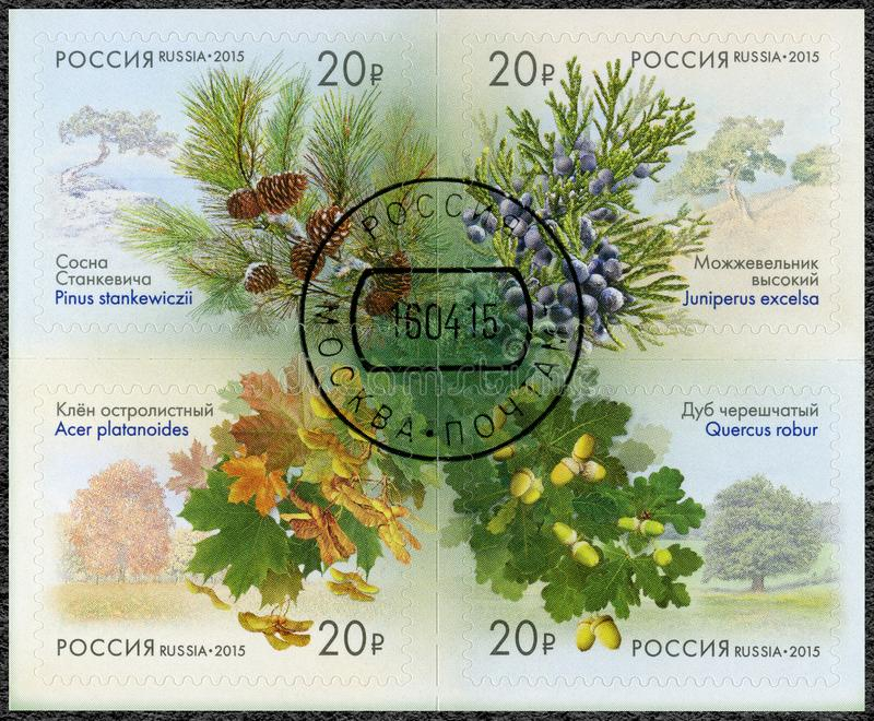 RUSSIA - 2015: shows series Flora of Russia, Cones of coniferous trees and shrubs royalty free stock photos