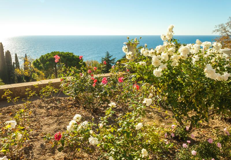Russia, Crimea, Alupka 03 November 2018: Roses on the terraces on the South side of Vorontsov Palace. Russia, Crimea, Alupka 03 November 2018: Roses on the stock images