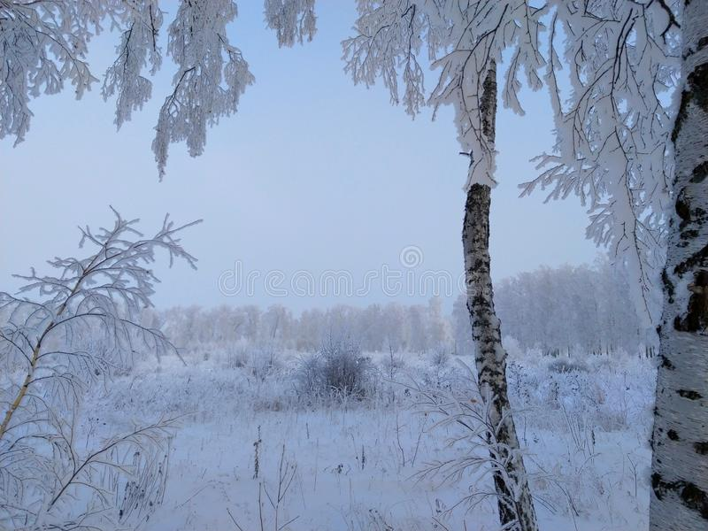 Russia, frosty morning in a birch alley stock photography
