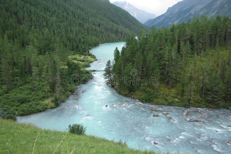 Russia Gorniy Altay lake Kucherlinskoe. Forest mountians nature royalty free stock images