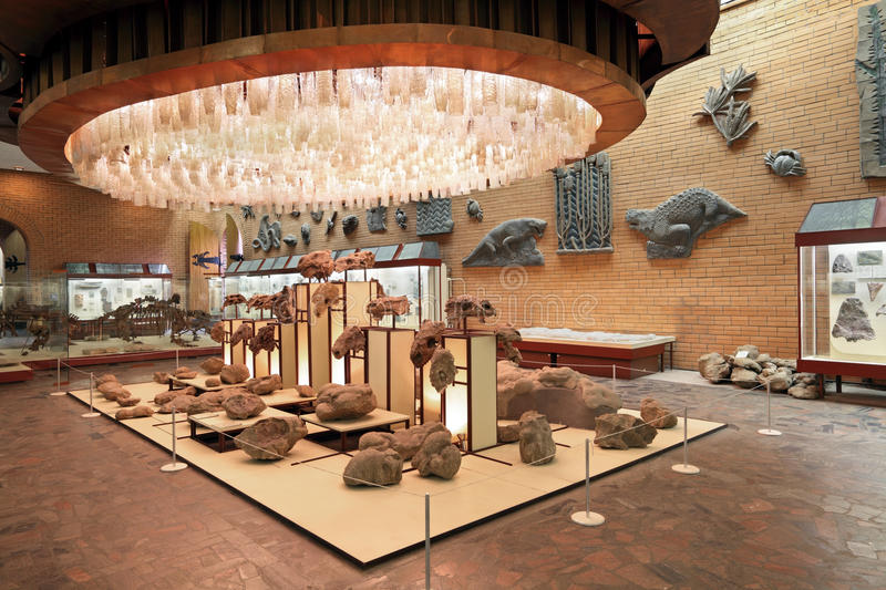 Download Paleontological Museum Editorial Photo - Image: 29852796