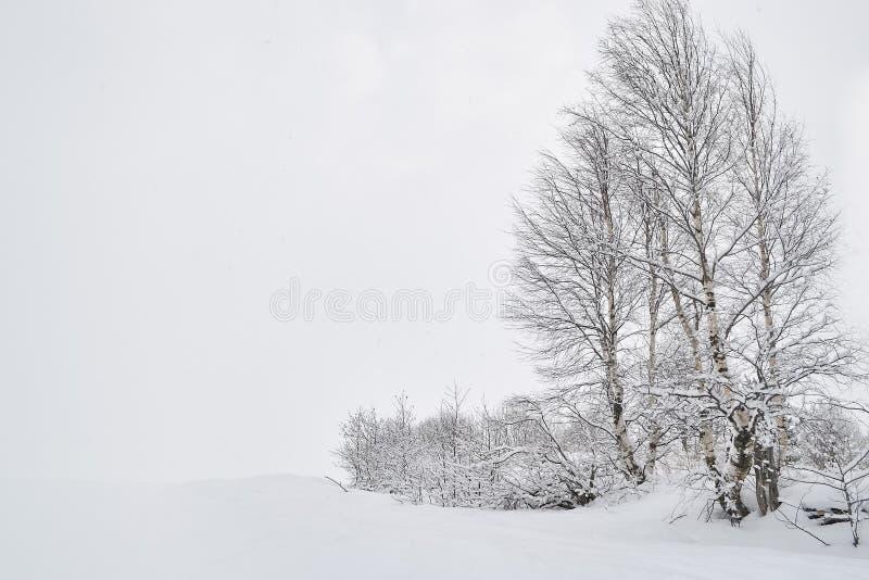 russia lasowa zima obraz stock