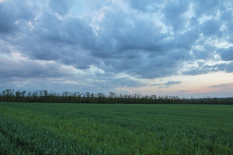 The movement of the thunderclouds over the fields of winter wheat in early spring in the vast steppes of the Don. Russia. The movement of the thunderclouds over royalty free stock photos