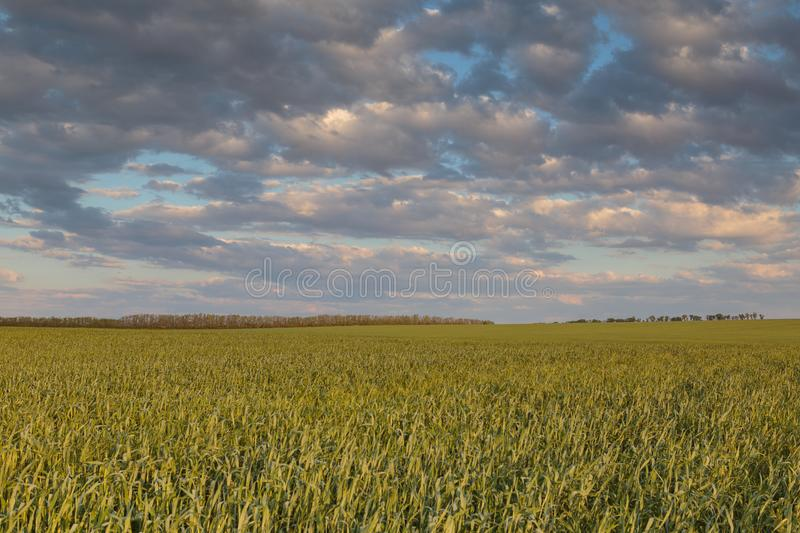 The movement of the thunderclouds over the fields of winter wheat in early spring in the vast steppes of the Don. royalty free stock images