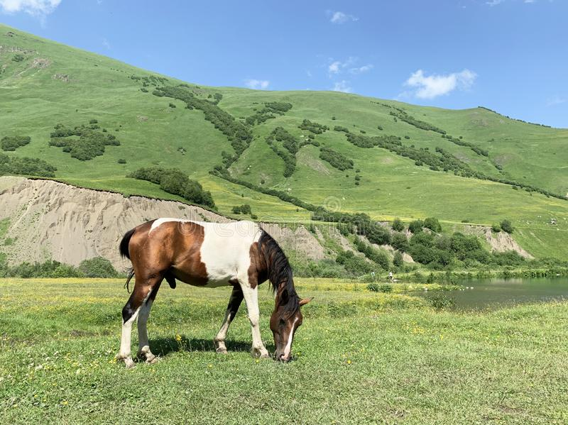 Russia, North Ossetia. Horse grazing on the shore of Midagrabin lake in the summer.  royalty free stock photo