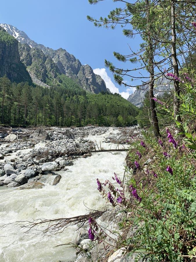 Russia, North Ossetia. Tseyskoe Tsey gorge, river Tseydon in summer.  royalty free stock images