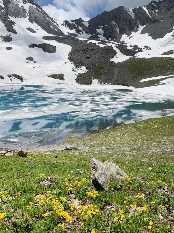 Russia, North Ossetia. Yellow flowers on the shore of lake Jodo East Zgur, Zgurskoye, Zgurskoe in the summer.  stock photo
