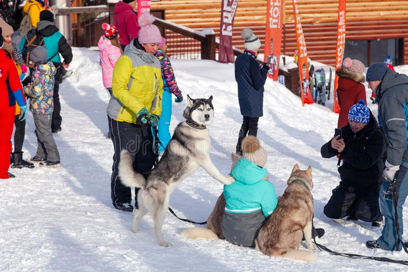Russia, Sheregesh 2018.11.17 Snowboarders and skiers with pretty dog in mountain resort, small cute chalets, cafes, funicular. Russia, Sheregesh 2018.11.17 royalty free stock photo