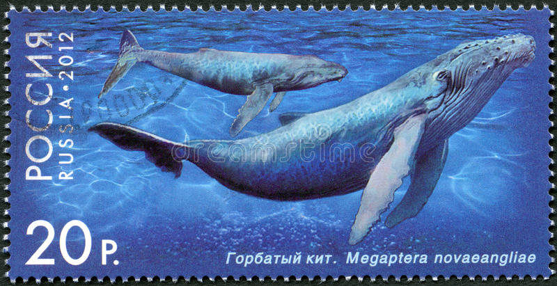 RUSSIA - 2012: Shows Humpback Whale, Series Royalty Free Stock Image