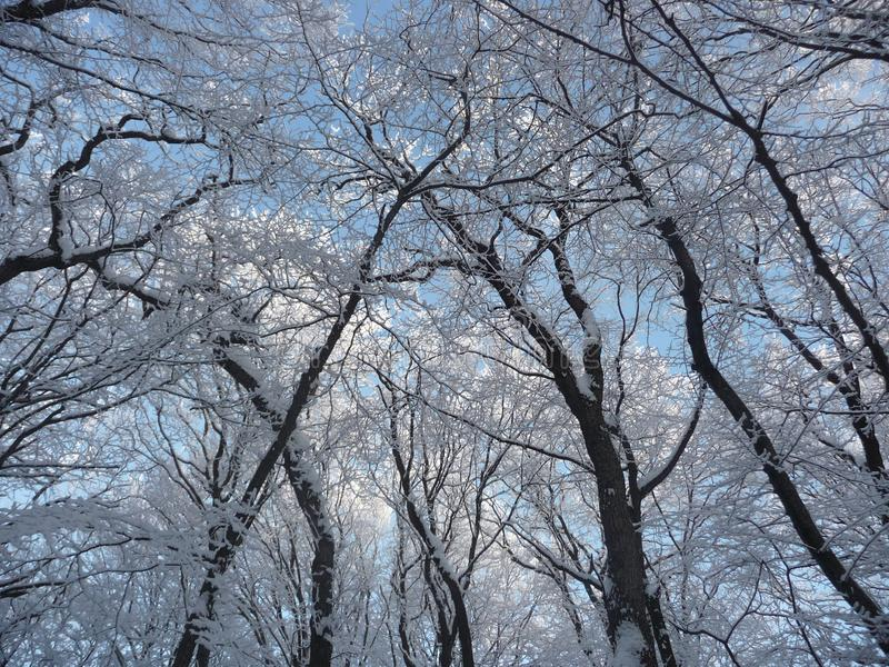 Russia. Snowy winter forest in the Stavropol `Taman Forest Dacha`. Russia. Snowy winter in the Stavropol forest `Taman forest Dacha`. February 2017 stock photos