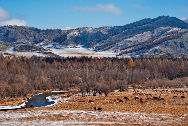 The ice on the rivers in late autumn. Russia. The South Of Western Siberia. In the cold rivers of the Altai Mountains in late autumn very clean water royalty free stock photos