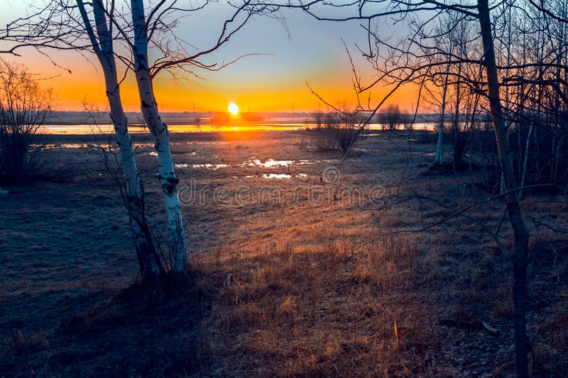 Sunrise over the channel. Russia Western Siberia dawn over the canal in May, birches in the foreground royalty free stock images