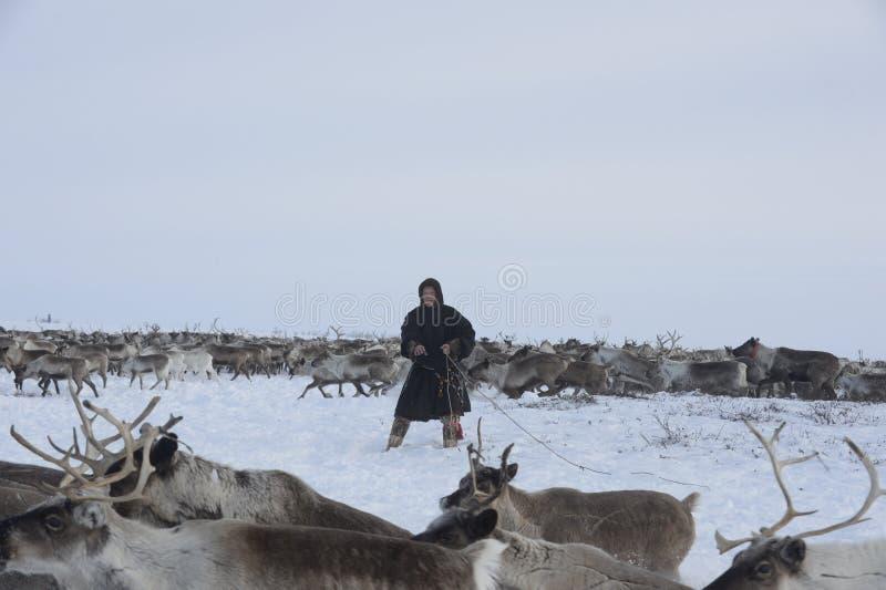 Russian Arctic Aboriginal ! stock image
