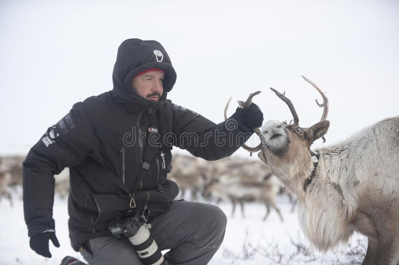 Russian Arctic Aboriginal !. A herd of deer in the Russian Arctic. Reindeer graze on the tundra of the Russian North. Arctic Circle. Priuralsky district of Yamal stock photo
