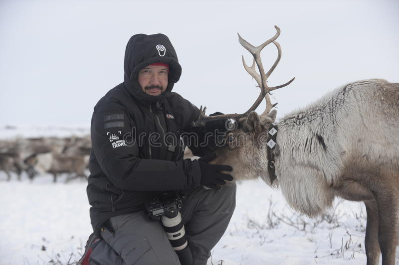 Russian Arctic Aboriginal !. A herd of deer in the Russian Arctic. Reindeer graze on the tundra of the Russian North. Arctic Circle. Priuralsky district of Yamal royalty free stock image