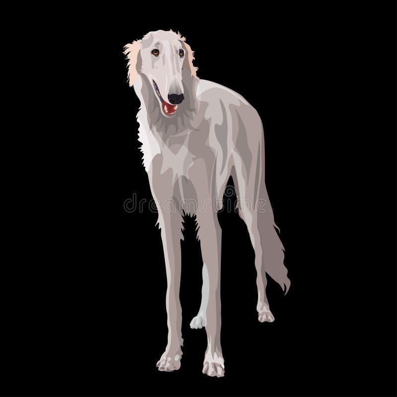 Russian borzoi dog. White russian borzoi dog. Vector illustration isolated on black background royalty free illustration