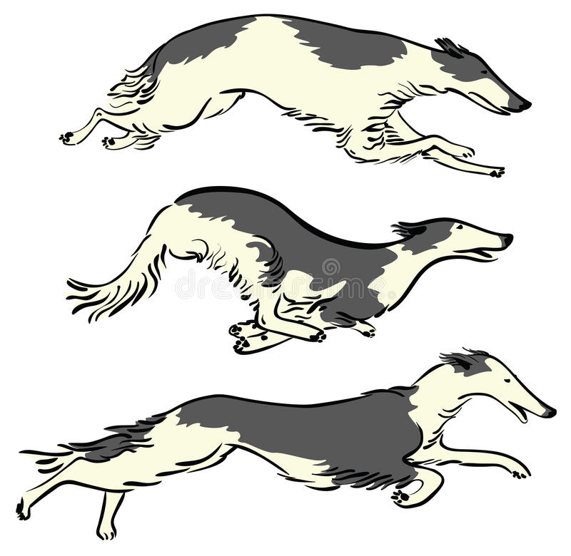 Russian Borzoi Dogs. Set with running Russian Borzoi Dogs, working dogs vector illustration