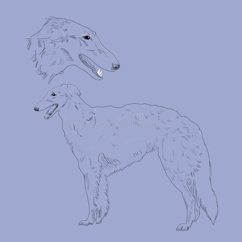 Russian hound hand drawn sketch. Hunting dog breed. Russian borzoi dog portrait stock illustration