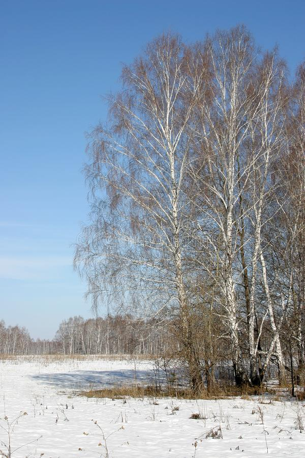 Russian nature royalty free stock photos