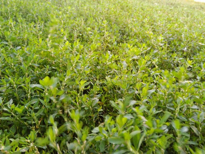Green grass in my yard stock photo