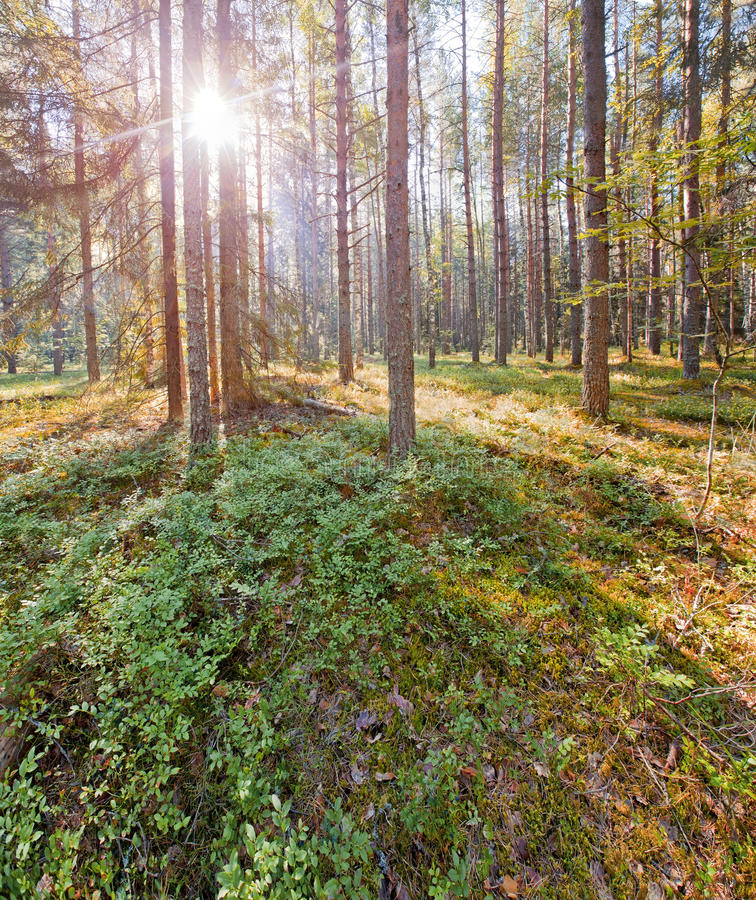 Russian North National Park. National Park Russian North in Vologda region. Summer panorama royalty free stock photography