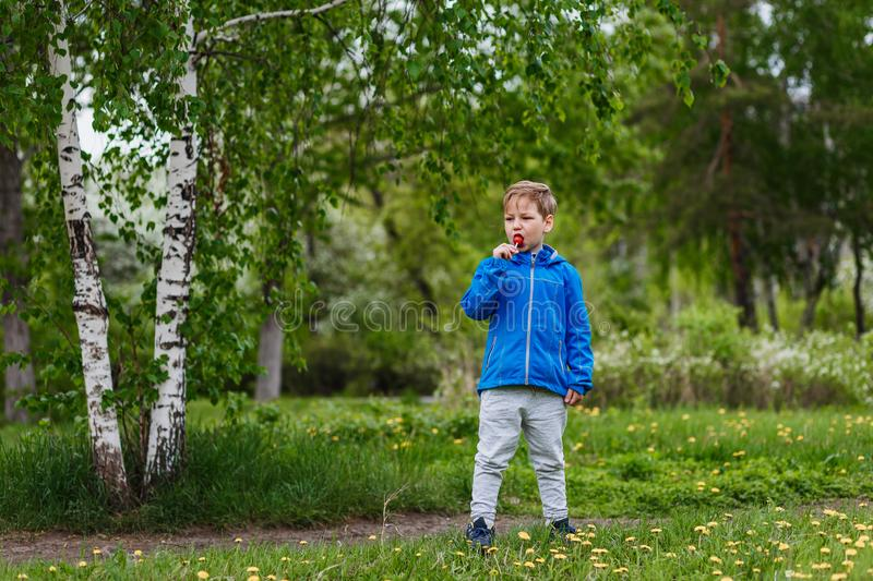 Russian six-year-old boy in a birch forest in full growth . a child licks a large Lollipop royalty free stock images