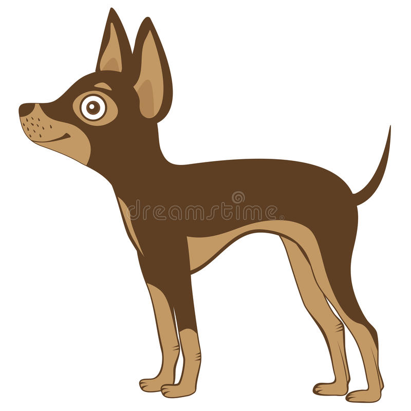 Download Russian toy terrier stock vector. Image of expression - 30707756