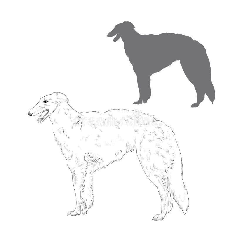 Russian wolfhound illustration. Hand drawn dog sketch. Borzoi dog silhouette stock illustration