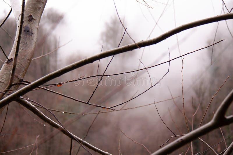 Russie Brouillard de Sotchi Adler photo stock