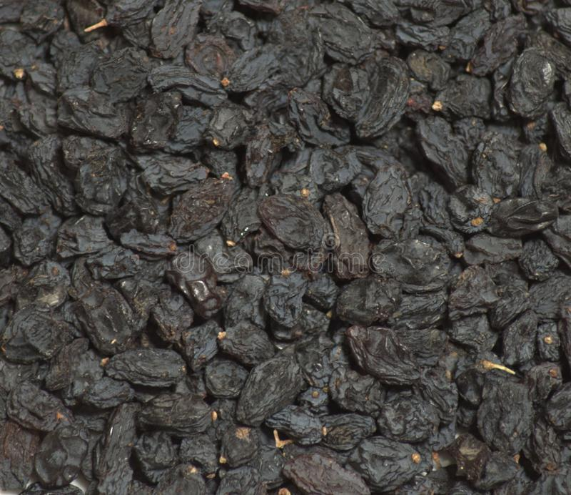 Russin för torkade druvor som ut läggas med en tät bakgrund Bilden tas i närbild arkivfoton