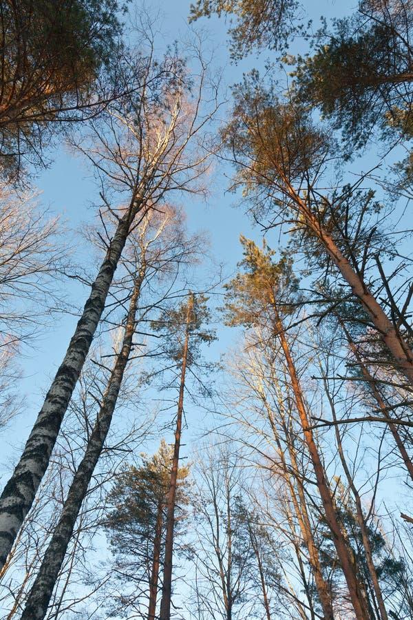Russisch bos stock foto