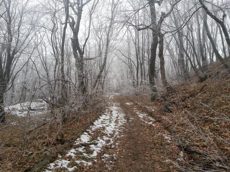 Russisch de winterhout stock afbeeldingen