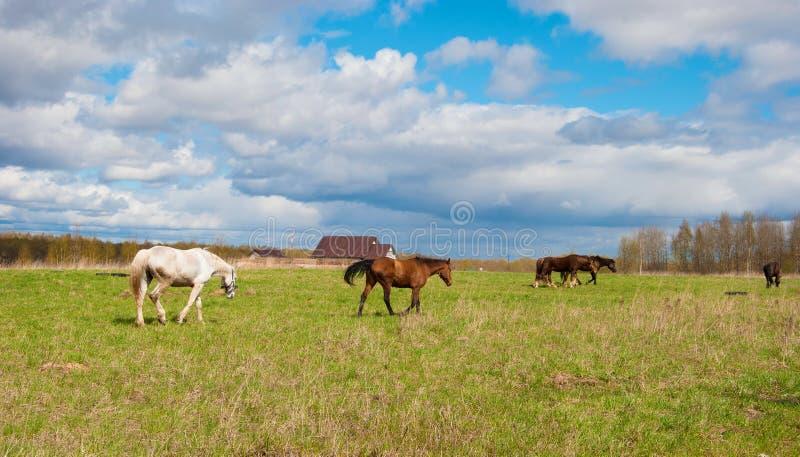 Download Russisch landschap stock afbeelding. Afbeelding bestaande uit nave - 54087995