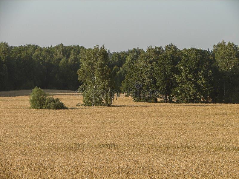 Russisch landschap in het Kaluga-gebied royalty-vrije stock fotografie
