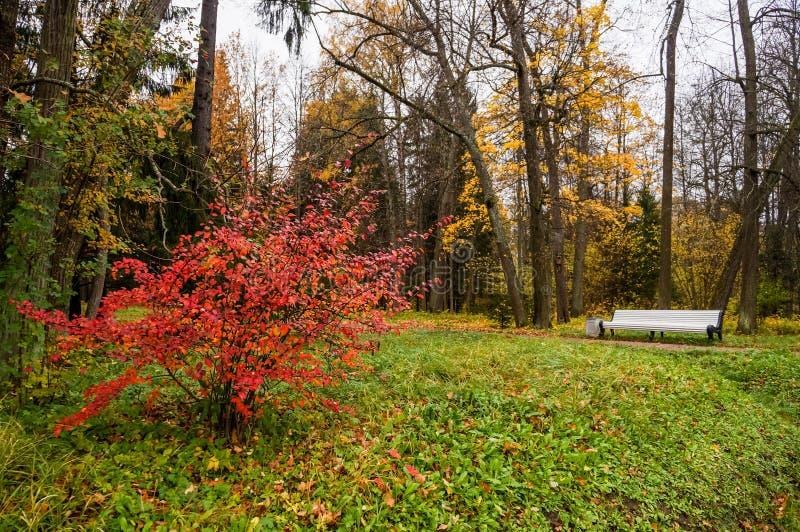 Russische Herbstlandschaft Wege im Oranienbaum-Park St Petersburg Herbst 2016 lizenzfreies stockfoto