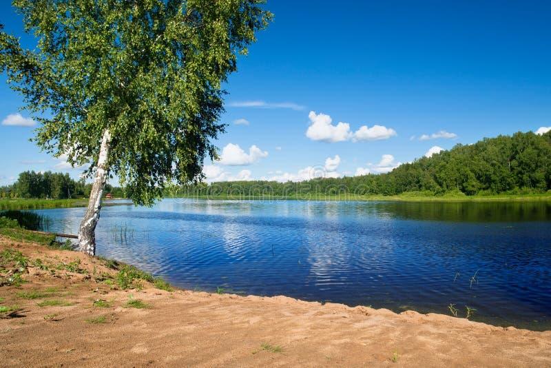 Russische Landschaft des Sommers mit einer Birke nahe der Wolga stockfotografie