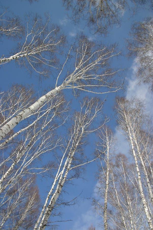 Russische Natur stockbild