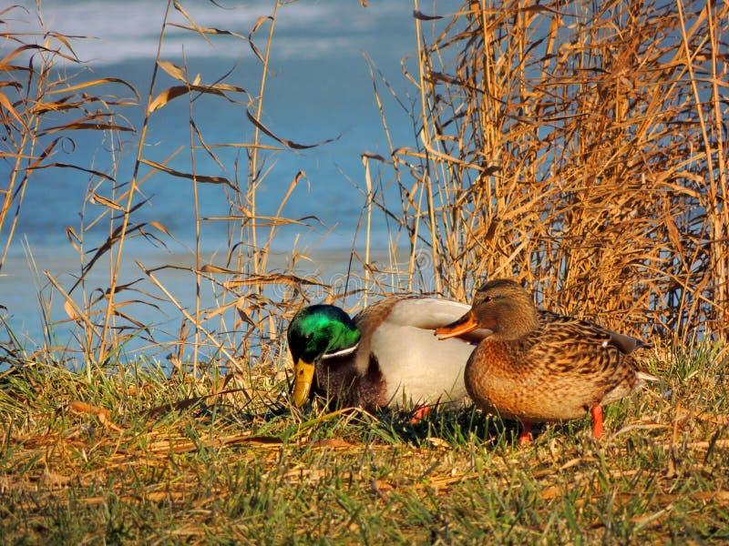 Russische Natur, Wildniswelt lizenzfreies stockfoto