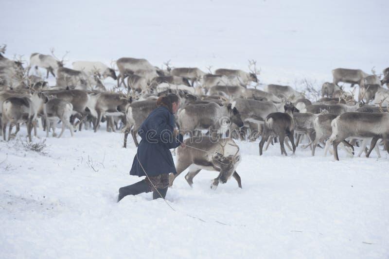 Russische Noordpool Inheems royalty-vrije stock fotografie