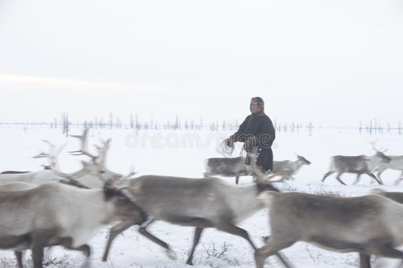 Russische Noordpool Inheems royalty-vrije stock foto's