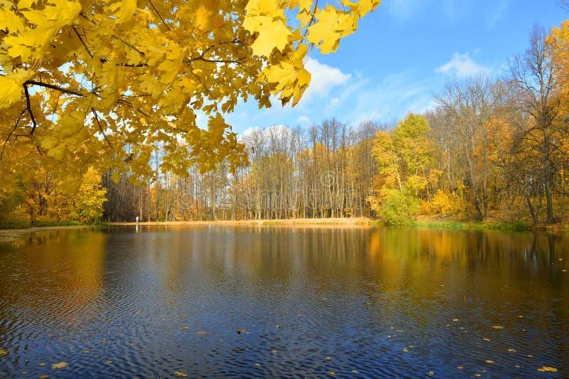 Russische seizoenen - Sunny Autumn op het bosmeer, Rusland royalty-vrije stock foto's