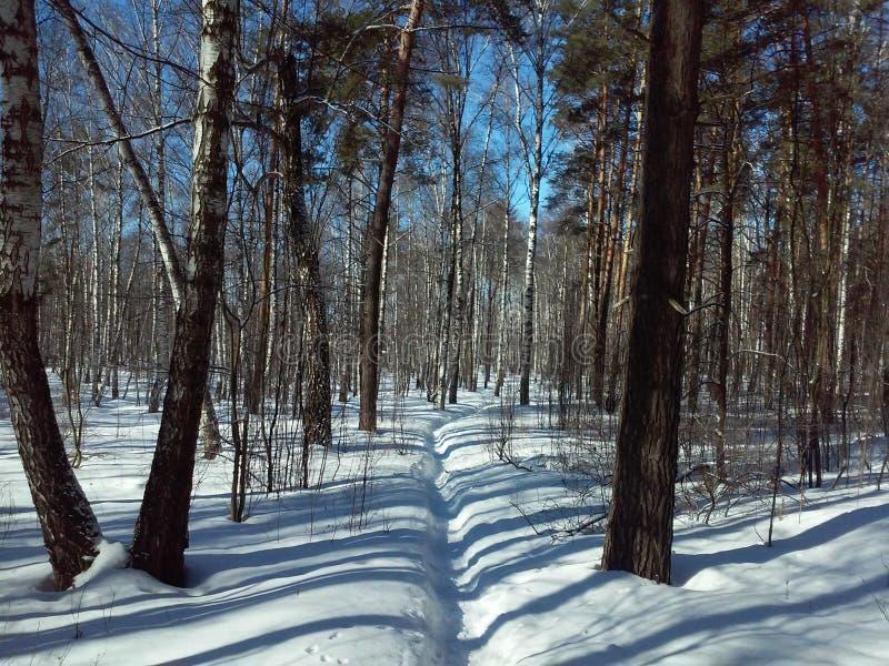 Russischer Wald im Winter lizenzfreies stockbild